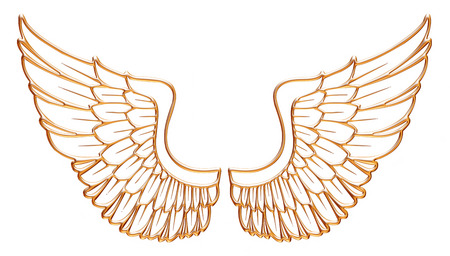 Golden eagle wing isolated on white background. photo