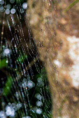 The natural cobweb under a large huge tree. Stock Photo - 25193459
