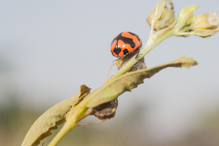 minuscule: This lady bug is playing hide and seek with me when I was taking these photos