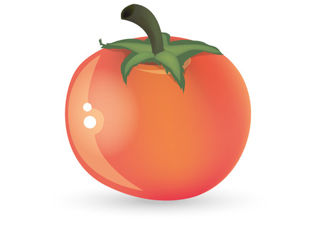 healty: The red tomato illustration, semi-realistic style drafted  Illustration