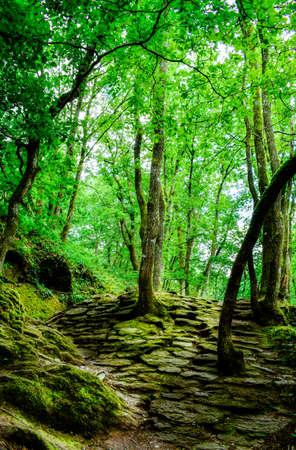 Forêt magique de Brocéliande, France
