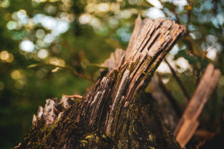 Nature Macro details. Split trunk with moss in the foreground and unfocused background.
