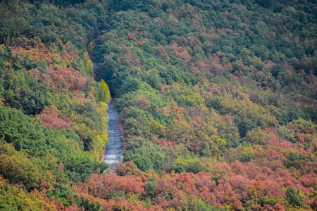 Road across a vivid colorful forest in autumn.