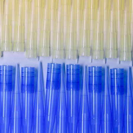 Blue and yellow universal laboratory pipet tips. Laboratory and science material concept.