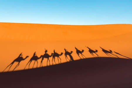 Daytime wide angle shoot of camel caravan silhouettes in desert dunes of Erg Chigaga, at the gates of the Sahara. Morocco. Concept of travel and adventure. Stockfoto