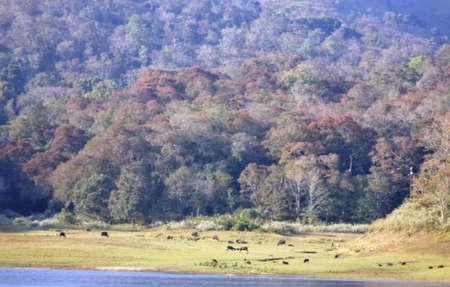 Animals in the Periyar National Park, Kerala Stock Photo
