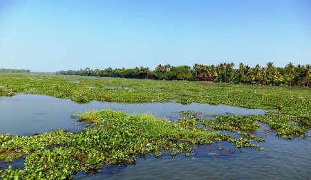 backwaters: Kerala backwaters