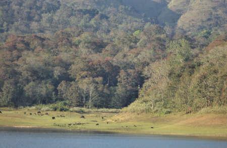 periyar: Periyar Wildlife Sanctuary, Kerala