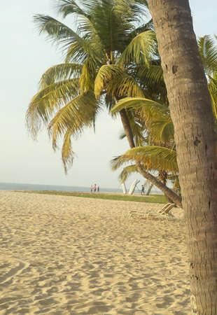 kerala: Mararikulam beach, Kerala Stock Photo