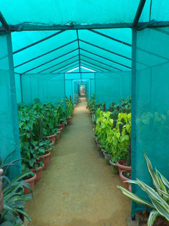 Potted plants kept under netted cloth shade