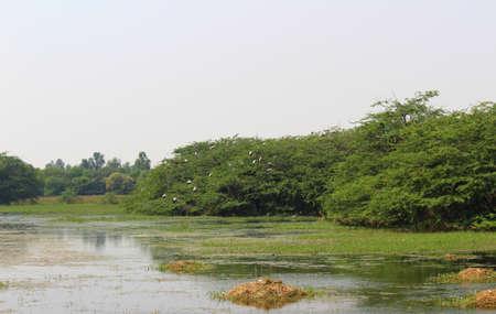 Sultanpur National Park, Gurgaon, Haryana, India