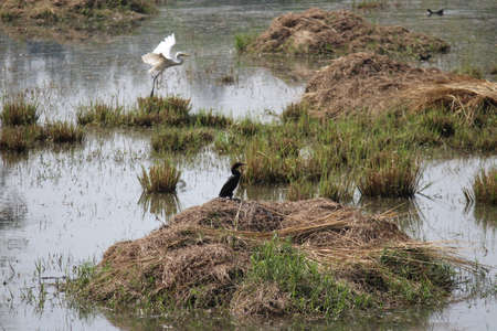 Birds at Sultanpur National Park