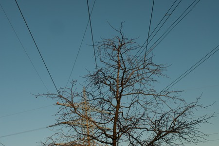 power: Power Pole and tree