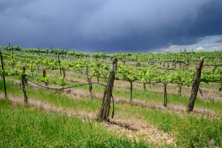 Stormy clouds over the grape vineyard stock photo