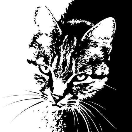 gaze: A ladycat striped long moustaches portrait looks in a lens. a white contrasting image is black Illustration