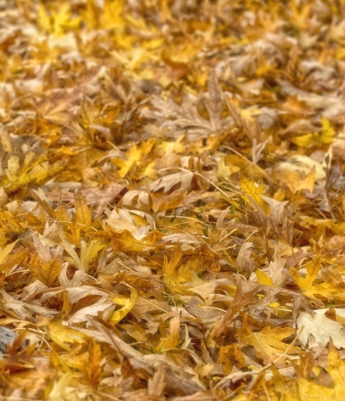 Autumn leaves on the land