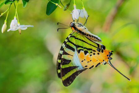 a pillangók és láncok életciklusa)