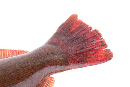 features: Halibut tail features, on a white background