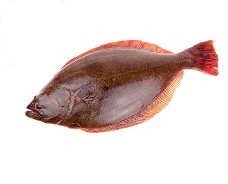A halibut isolated on a white background