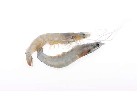 unprocessed: Fresh prawns isolated on a white background