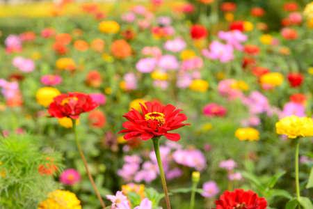 blooming: Blooming flower Stock Photo
