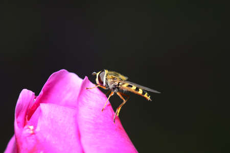 bee on flower: A bee on the flower