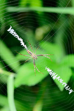 underbrush: The spider