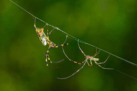 underbrush: The spider
