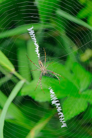 insectivorous: The spider