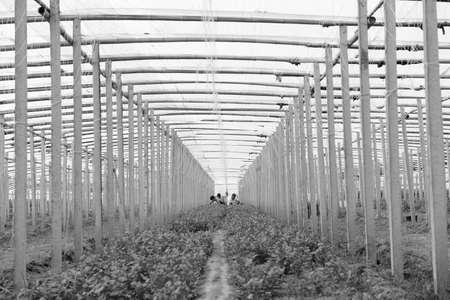 greenhouses: greenhouses