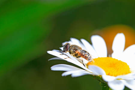 A bee is on a flower