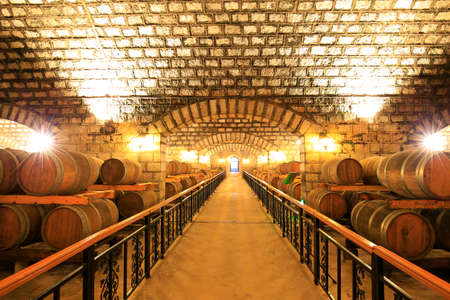 Many barrels are placed in the wine cellar