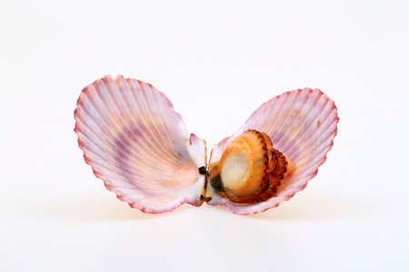 Scallops isolated on a white background Stock Photo