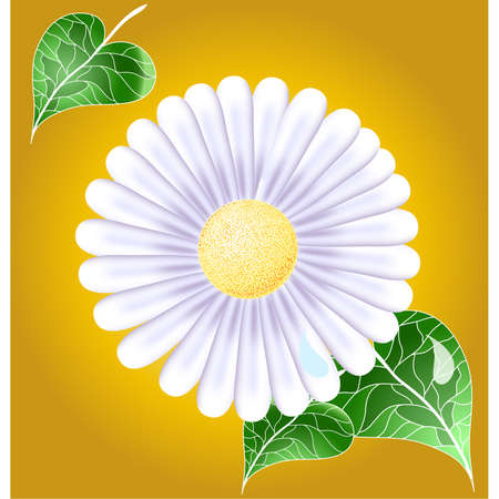Green backgrond with white camomile Stock Vector - 16977510
