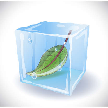 ice cube: Ice cube with leaf Illustration