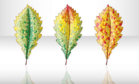 Autumn colorful leafs. Illustration 10 version