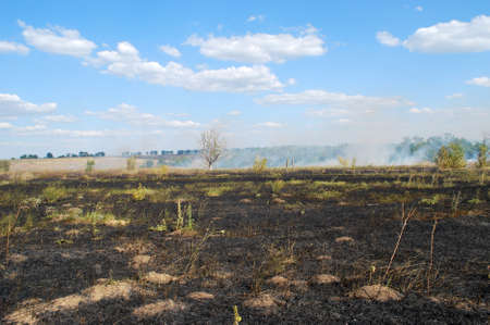 waif: a fire in the woods, the smoke from the fire, burned grass Stock Photo