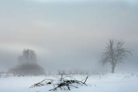 Winter landscape with branches in the foreground Stock Photo