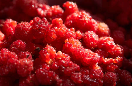 Appetizing raspberry close in the light of a sunny day