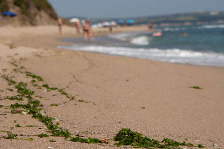 Sea beach with algae in the foreground.