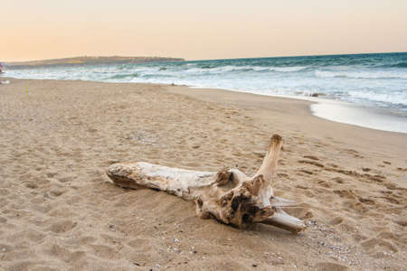 Dry tree on the sea beach. Banque d'images - 126054446