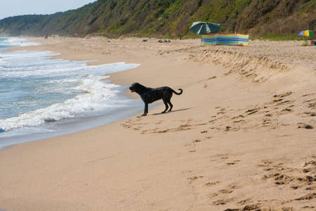 Black dog stands alone on the beach Banque d'images - 126055582
