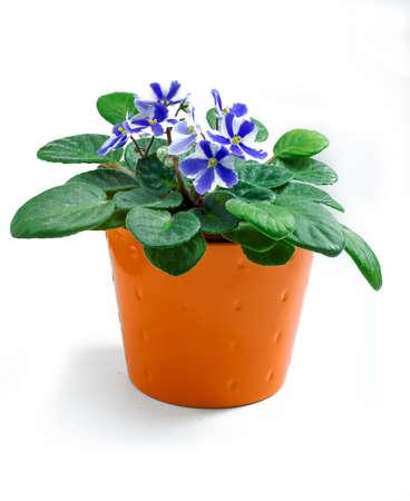 orange pot with flowers,isolated on white background