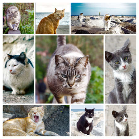 Photos of stray cats in a custom collage - background frame  (You can find them separately in my portfolio) Banco de Imagens