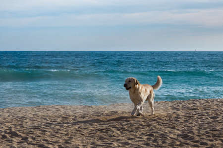 Dog playing in the sand of a beach