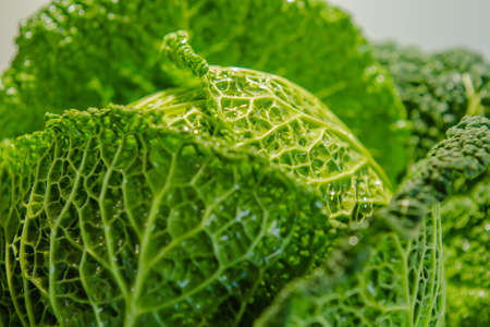 vegetable carbon: Fresh savoy cabbage close-up