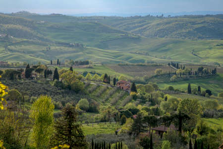 typical: Typical Tuscan countryside Italy