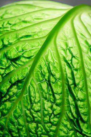 vegetable carbon: savoy cabbage leaf Stock Photo
