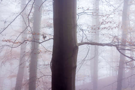 mixed wallpaper: Nature Misty Forest