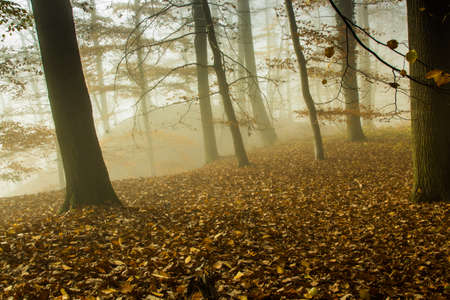 mixed wallpaper: Nature Misty Forest Landscape Stock Photo